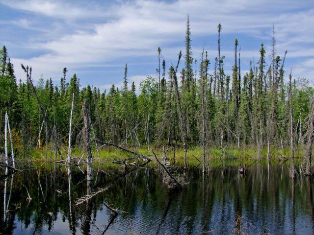 Zdjęcia: Koyukuk Area, tajga, ALASKA