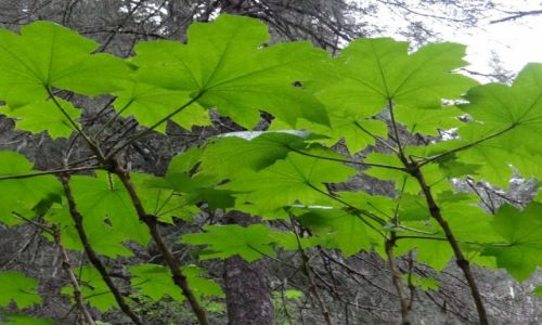 Zdjęcie ALASKA / Seward / National Forest / Alaska
