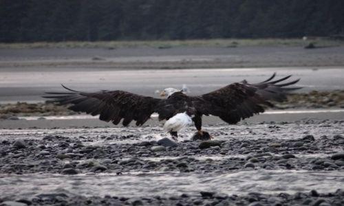 Zdjęcie ALASKA / Homer / Inlet Cook / Konkurs