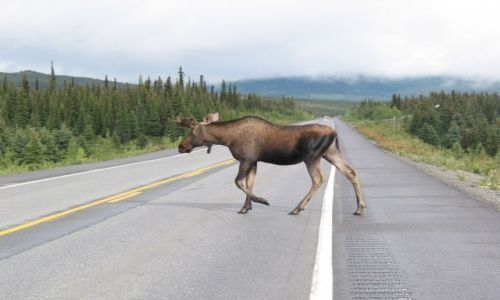 Zdjecie ALASKA / Alaska / Alaska / Typowy alaskański widok
