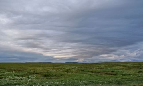 ALASKA / - / Alaska / North Slope  / tundra