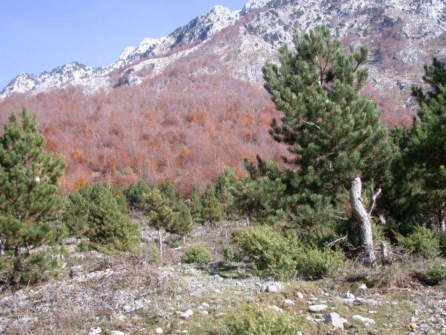 Zdj�cia: okolice Koplika, Jesie� w Albanii, ALBANIA