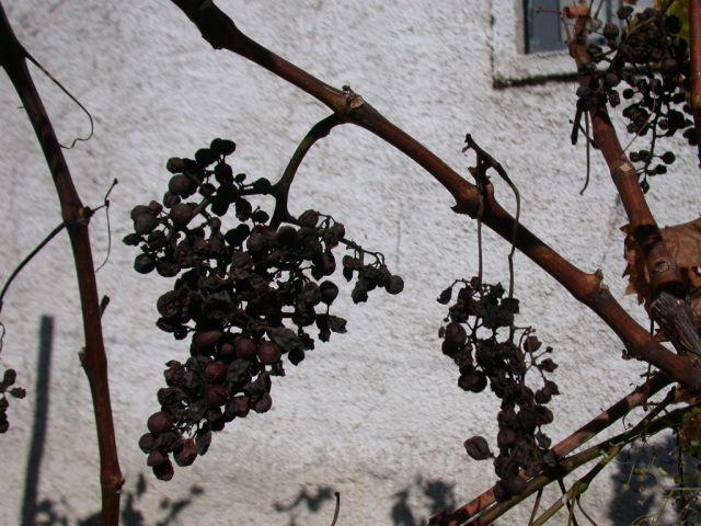 Zdjęcia: okolice Koplika, Rodzynki, ALBANIA