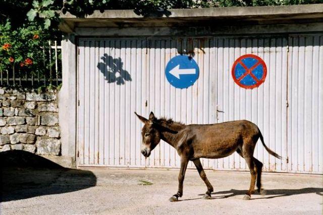 Zdjęcia: Muriqan, Posłuszny osioł, ALBANIA