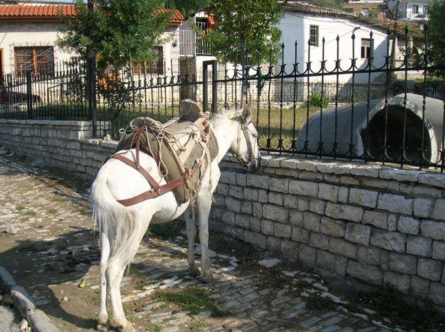 Zdjęcia: Berat, Albania, w oczekiwaniu na klienta, ALBANIA