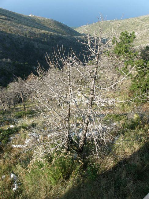 Zdjęcia: riwiera albańska, Bałkany, mała przełęcz 2, ALBANIA