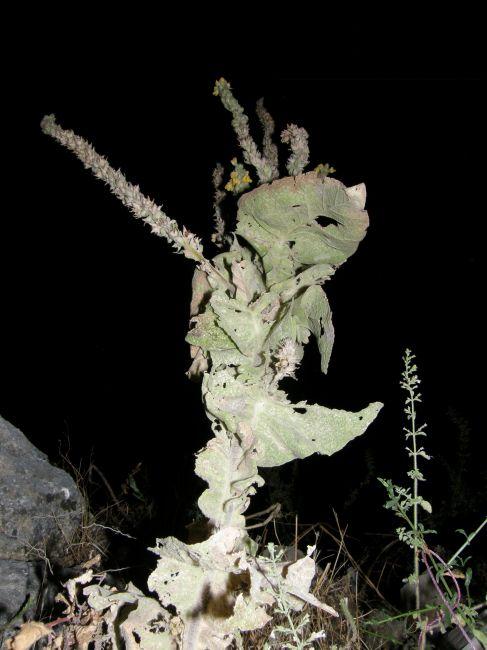 Zdjęcia: riwiera albańska, Bałkany, chwasty nocą , ALBANIA