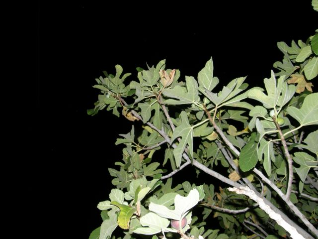 Zdjęcia: riwiera albańska, Bałkany, oliwki nocą, ALBANIA