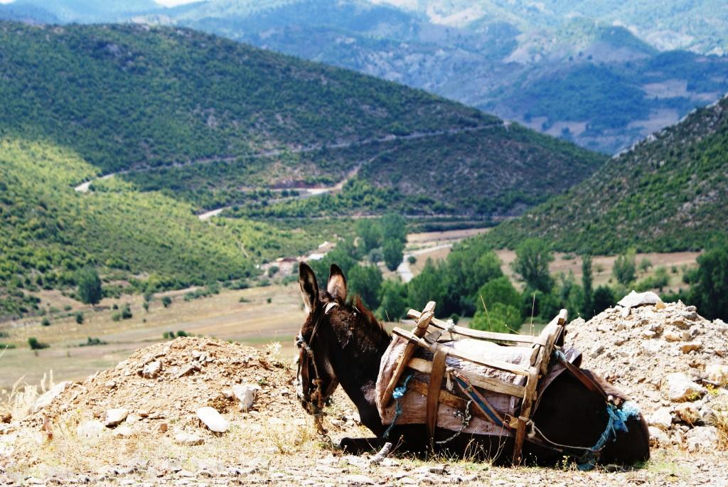Zdjęcia: gdzieś w górach, gdzieś w górach, Osiołki - stały element albańskich szlaków górskich, ALBANIA