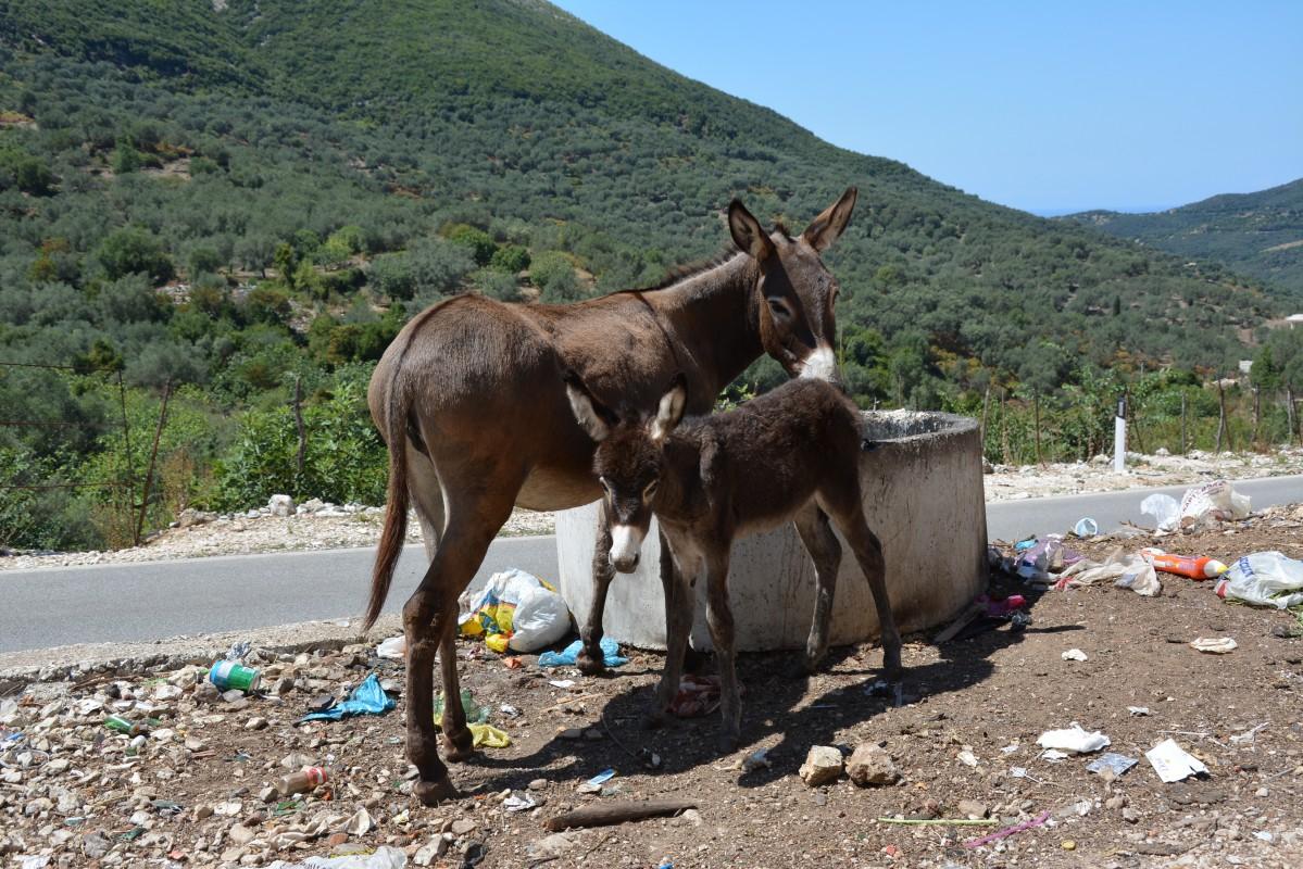 Zdjęcia: Borsh, Borsh, ośli los..., ALBANIA