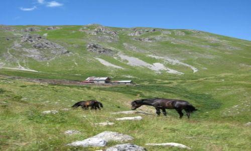 Zdjecie ALBANIA / Szar Planina / Szar Planina / konie