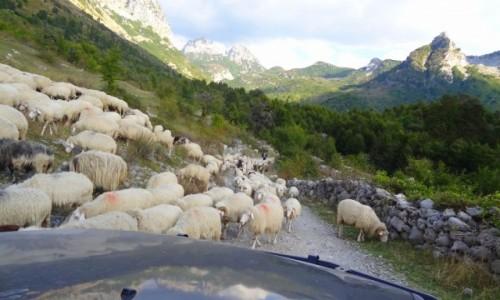 Zdjęcie ALBANIA / Góry przeklęte /  Okolice Theth /  Pierwszeństwo w górach