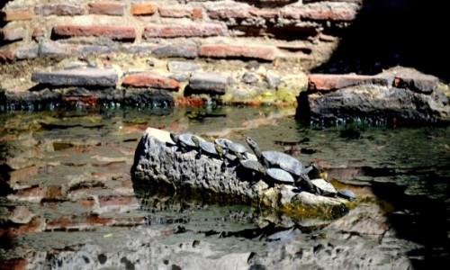 Zdjęcie ALBANIA / Butrint Ruins / Butrint / Żółwiki