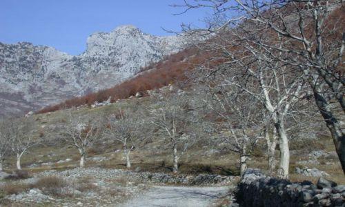 Zdjecie ALBANIA / brak / okolice Koplika / Jesień w górach