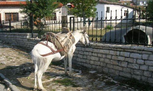 ALBANIA / Albania / Berat / w oczekiwaniu na klienta
