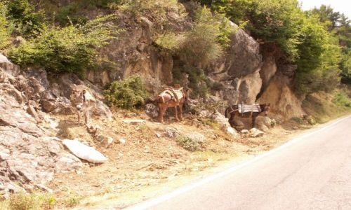 Zdjecie ALBANIA / okolice Elbasan / W drodze do Tirany / Moja Albania