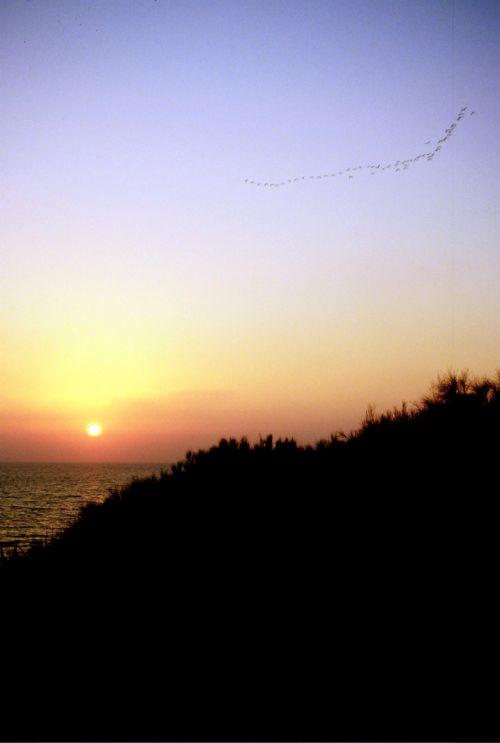 Zdjęcia: La Marsa, wschodnia Algieria, klucz ptaków o zachodzie słońca, ALGIERIA