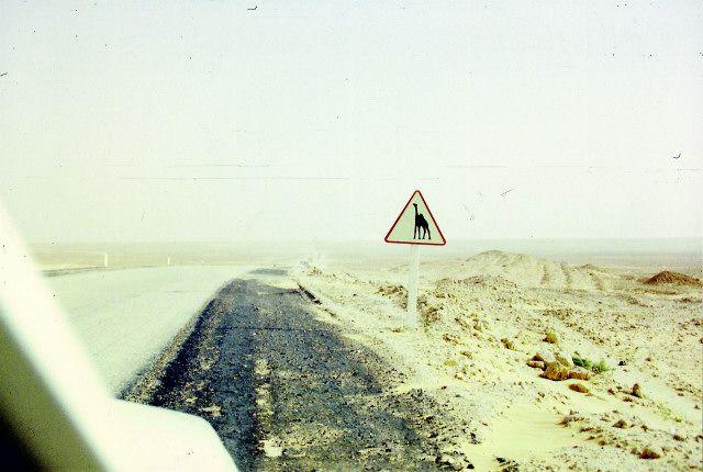 Zdjęcia: okolice Laghuat, południe, uwaga, wielbłądy, ALGIERIA