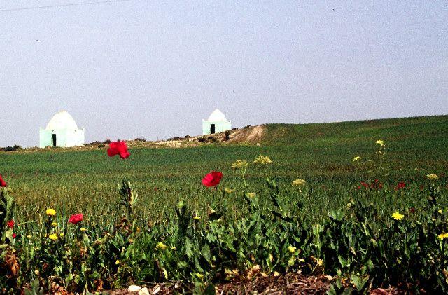 Zdjęcia: koło Sidi bel Abbes, południe, marabuty- bliźniaki, ALGIERIA