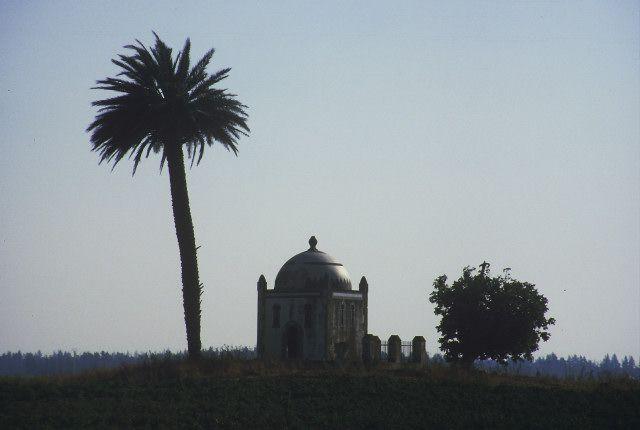 Zdjęcia: okolice Annaby, wschód, maramut z palmą, ALGIERIA