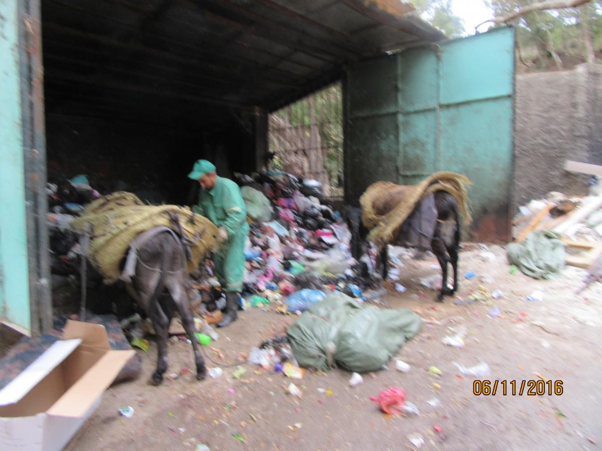 Zdjęcia: Algier, Algier, Algier - wywożenie śmieci osiołkami, ALGIERIA