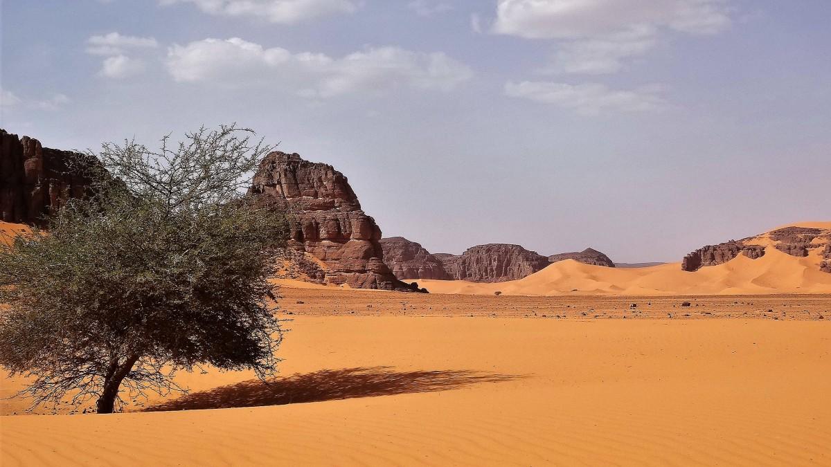 Zdjęcia: Tadrart, Sahara, Ostatnie drzewko, a potem już tylko skały i piach, ALGIERIA