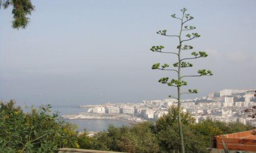 Zdjecie ALGIERIA / - / Algier / Panorama Algier