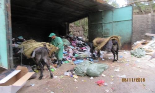 ALGIERIA / Algier / Algier / Algier - wywożenie śmieci osiołkami