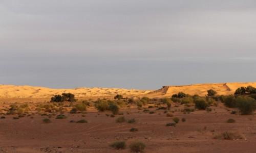 Zdjecie ALGIERIA / Sahara poludniowa / Bechar / sloncem malowane