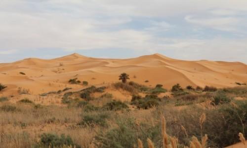Zdjecie ALGIERIA / Sahara poludniowa / Bechar / piaskowe zycie