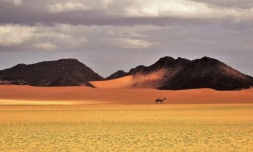 Zdjecie ALGIERIA / Sahara / Po drodze do Merzouga / 9 dni w 7 niebie: samotność przed burzą