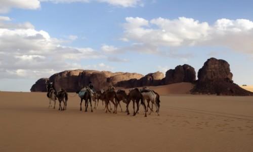 ALGIERIA / Sahara / Tadrart / 9 dni w siódmym niebie - karawana na Saharze to już rzadkość