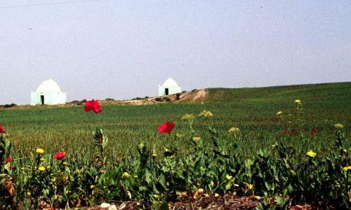Zdjecie ALGIERIA / południe / koło Sidi bel Abbes / marabuty- bliźniaki
