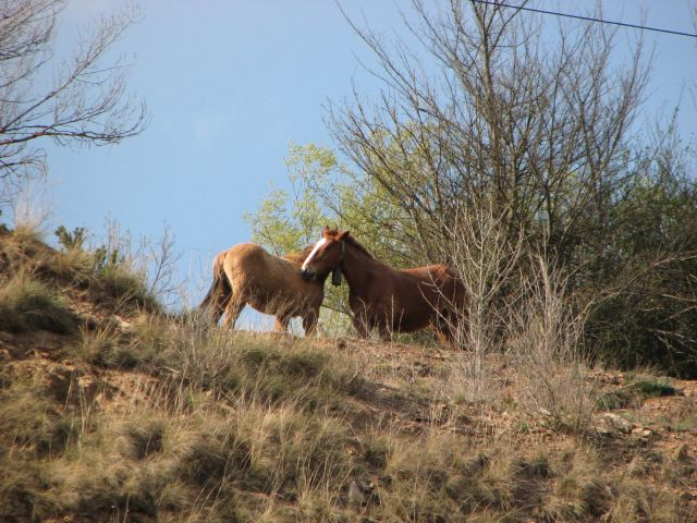 Zdjęcia: gdziesz w drodze, Andora, koniki, ANDORA