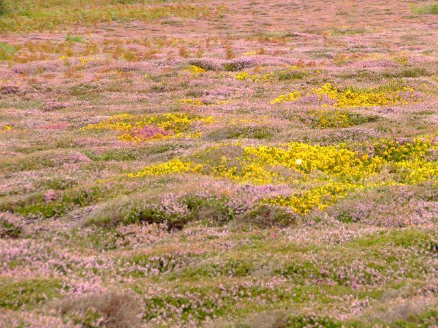 Zdjęcia: poludniowa anglia, Bournemouth, troche łąki..kolorowej, ANGLIA