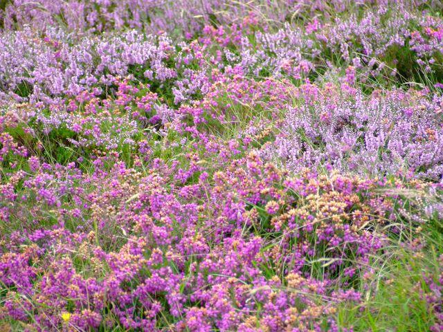 Zdj�cia: poludniowa anglia, Bournemouth, kwiatki, ANGLIA