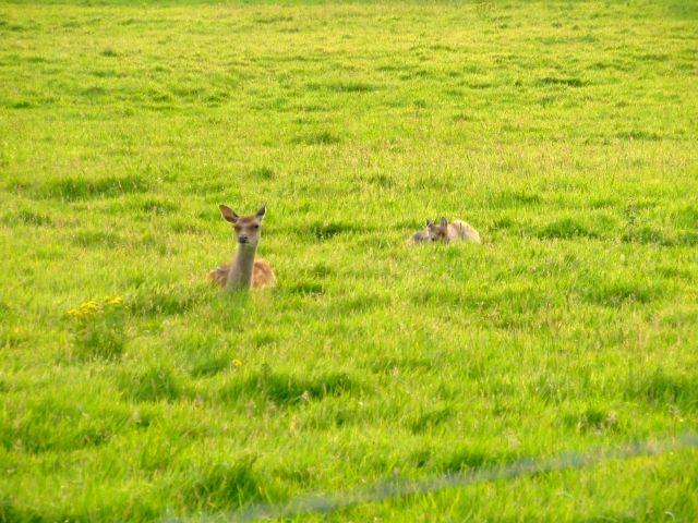 Zdjęcia: poludniowa anglia, Swanage, co w trawie piszczy..:), ANGLIA