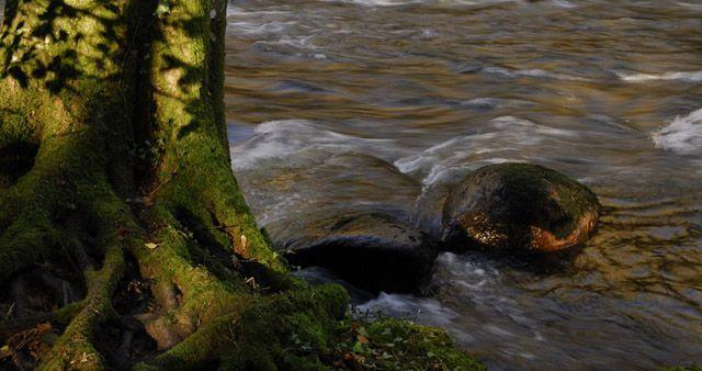 Zdj�cia: Dunsford, Dartmoor, Rzeka Teign, ANGLIA