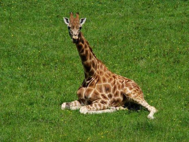 Zdjęcia: Flaming Park, North Yorkshire, no  kurcze  jak mi ta  noga scierpla, no i jak mam teraz wstac?, ANGLIA