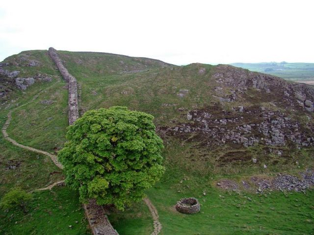 Zdjęcia: droga  B6318, Northumberland  National Park,  symboliczne drzewo, ANGLIA