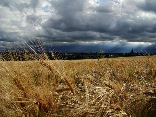 Zdj�cia: Wakefield, okolice Wakefield, nadciaga letnia burza ?, ANGLIA