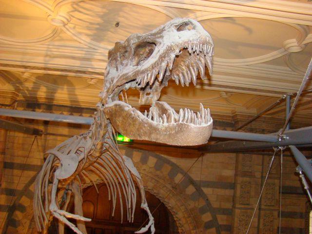 Zdjęcia: South Kensinghton, Londyn, T-rex, ANGLIA