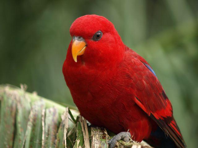 Zdjęcia: Oxfordshire, Oxfordshire, Zwierzątka- papużka, ANGLIA