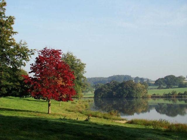 Zdjęcia: Ripley, North Yorkshire, drzewko w palacowym ogrodzie, ANGLIA