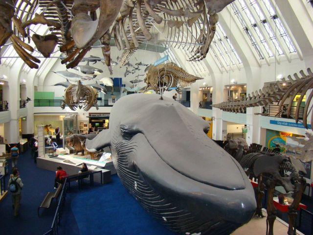 Zdj�cia: Muzeum , Londyn, Wieloryb, ANGLIA