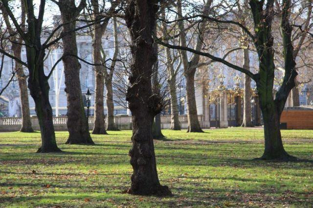 Zdjęcia: Londyn ,  Westminster, Buckingham Palace , ANGLIA