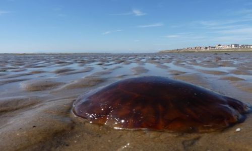 Zdjecie ANGLIA / Blackpool / Blackpool / meduza