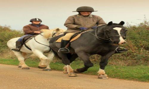 Zdjęcie ANGLIA / East Midlands / Thorp Malsor / Anglicy kochają konie...