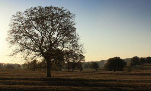 Zdjęcie ANGLIA / East Midlands / Geddington / Jesienny i zimny wieczór