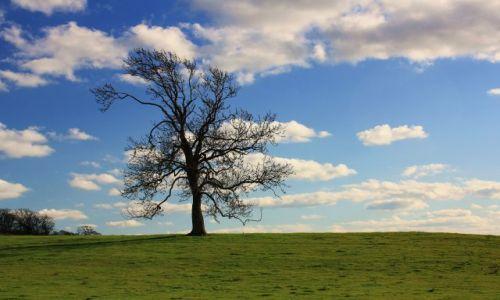 Zdjęcie ANGLIA / East Midlands / Warkton / Wreszcie wiosna